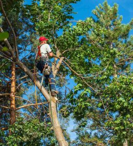 Arborist Tree Surgeon Las Vegas NV