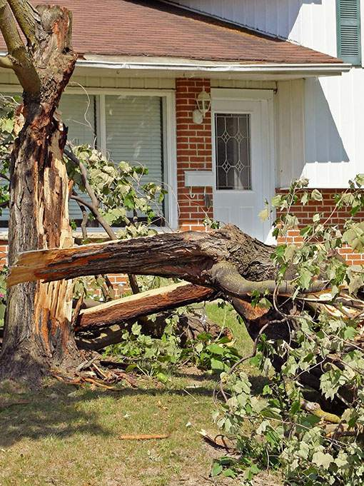 fallen-tree-after-a-storm-emergency