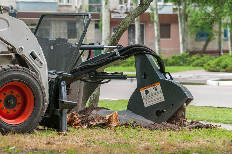 Stump Grinding In Vegas