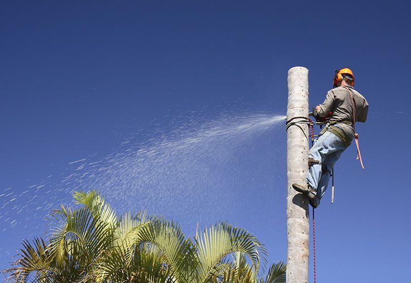 Tree Removal Las Vegas NV