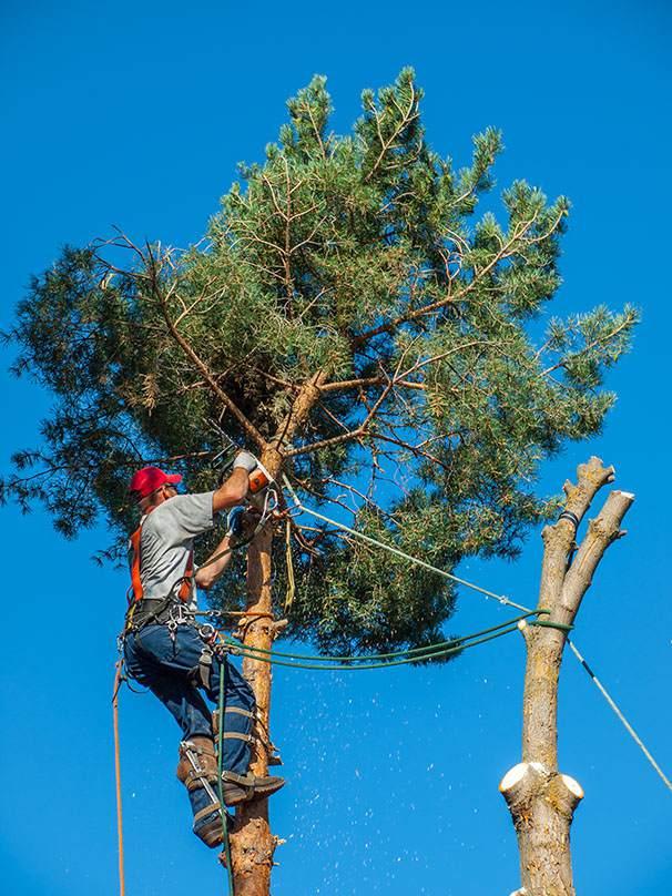 Tree Trimming Las Vegas NV